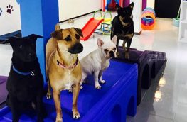 Doggie Daycare, Boarding and Grooming Service For Sale