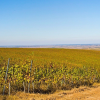 Large Vineyard for sale/Wine business in Romania